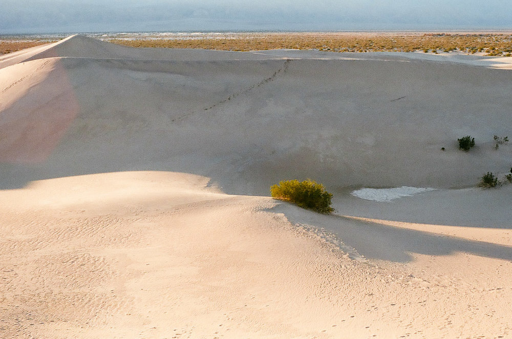 In Death Valley, the sand dunes from afar almost look made out of concrete. With a relentless wind that sweeps away trails every day, we wander, uninhibited, wherever we please.
