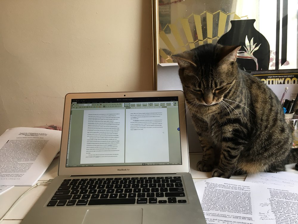 Here's Wilco doing her very best academic work.