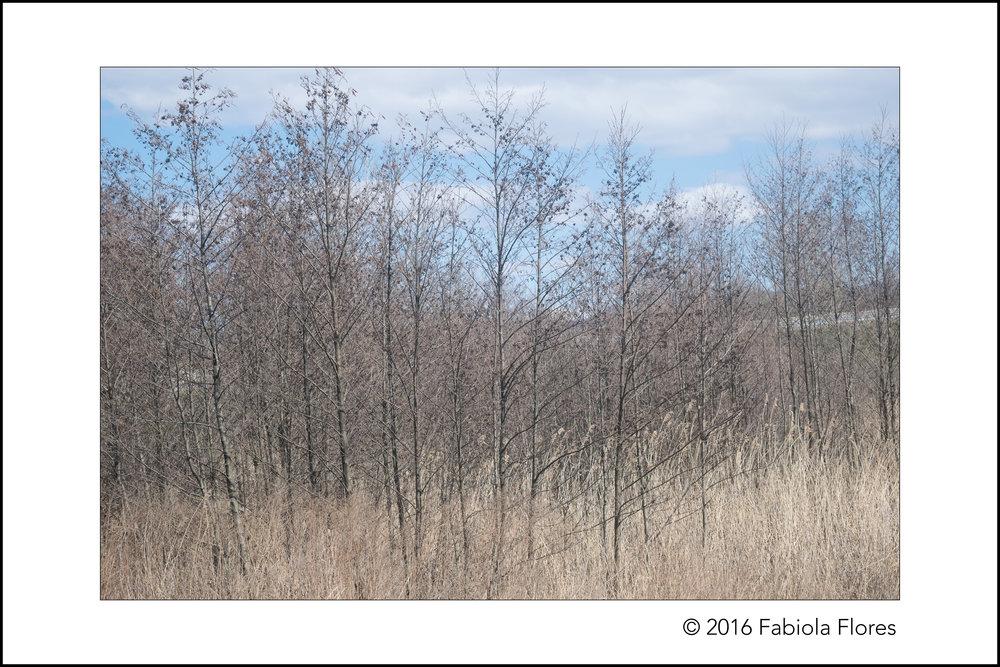 flores_f_20160412_0246.jpg