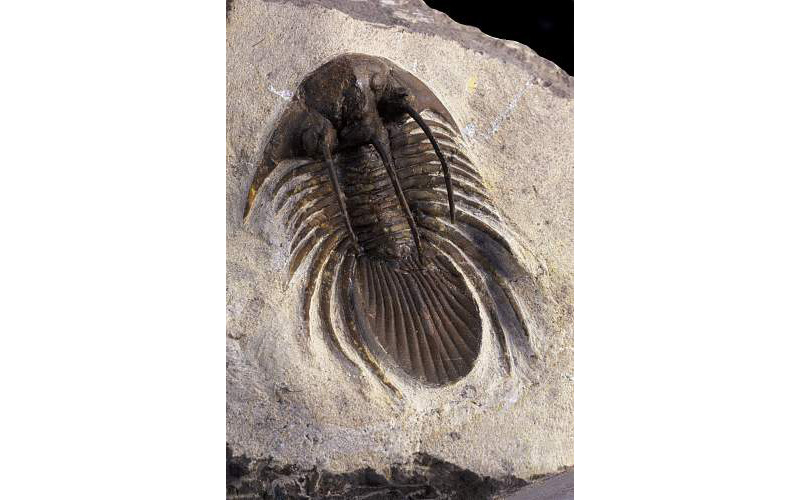 Early Life Fossils