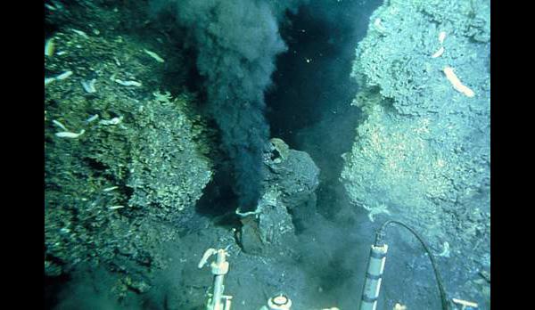 Deep Sea Photographs