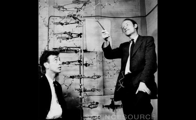 Watson & Crick with DNA Model - S8129