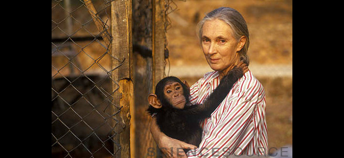 Jane Goodall with Chimpanzee - NA3867