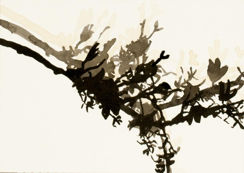 flora #4a_2011.jpg