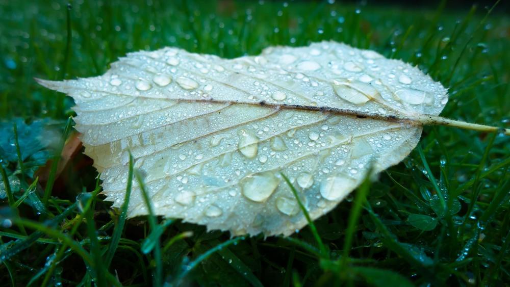 Dauwdruppels fotograferen - herfstfotografie in Bouckenborghpark in Deurne - begin van een grasperk vond ik dit blad