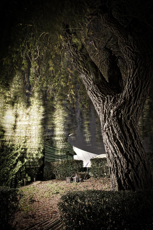 Zelfde boom in kleur met de 'spook takken'