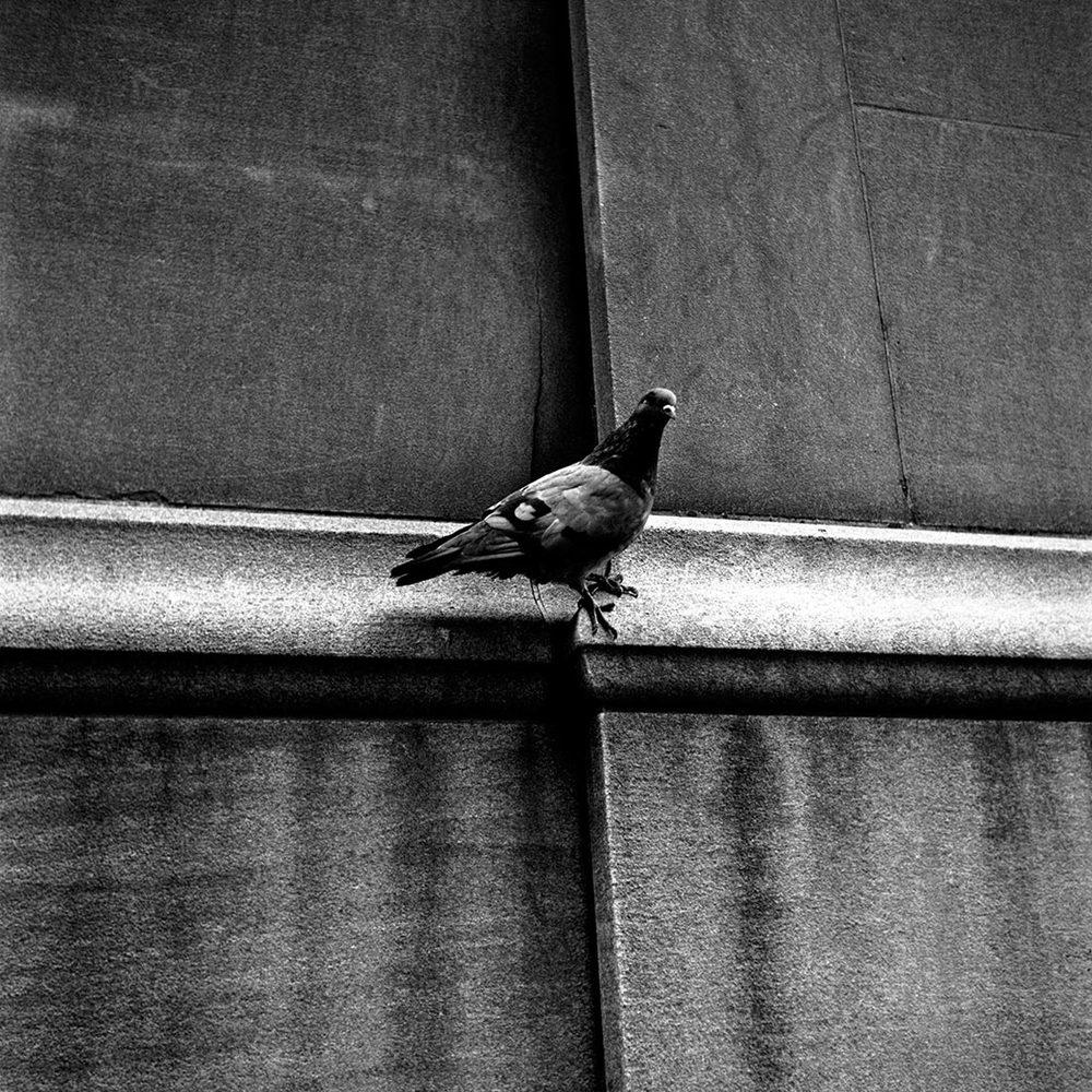Vivian-Maier duif.jpg