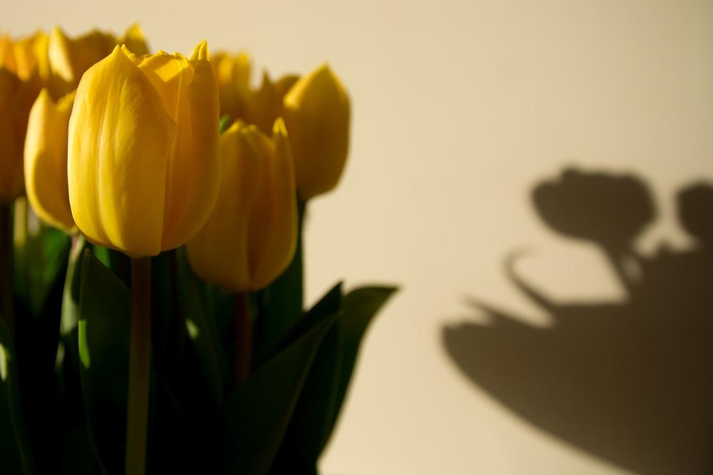 Met een beetje strijklicht van buiten krijg je een mooi spel van geel en schaduw.