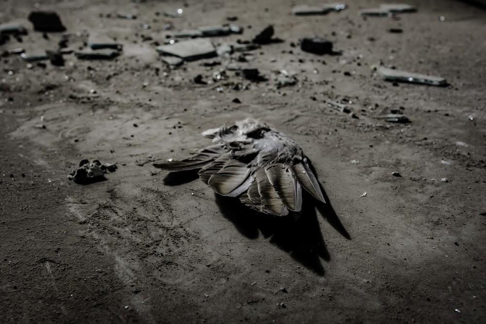viewfinder-eigenzinnige-fotografie-urbex-vergane-glorie-oude-papierfabriek-dode-duif-vleugel