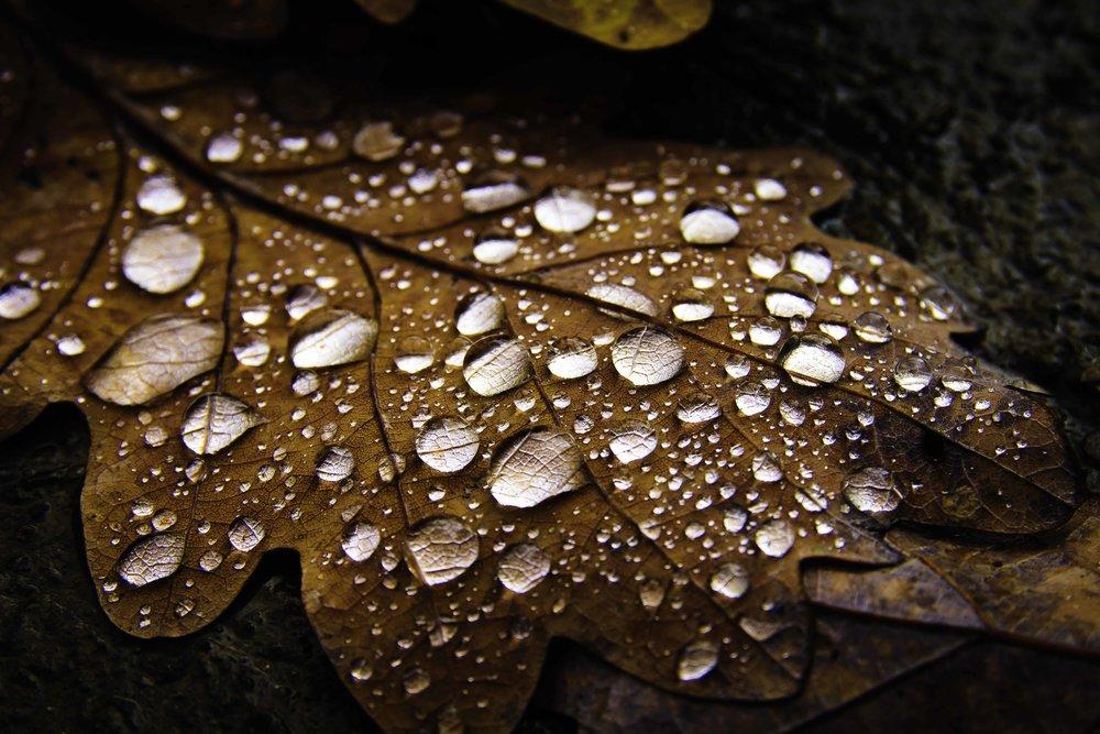 viewfinder-zomaar-zondag-herfst-automne-autumn-microscopp