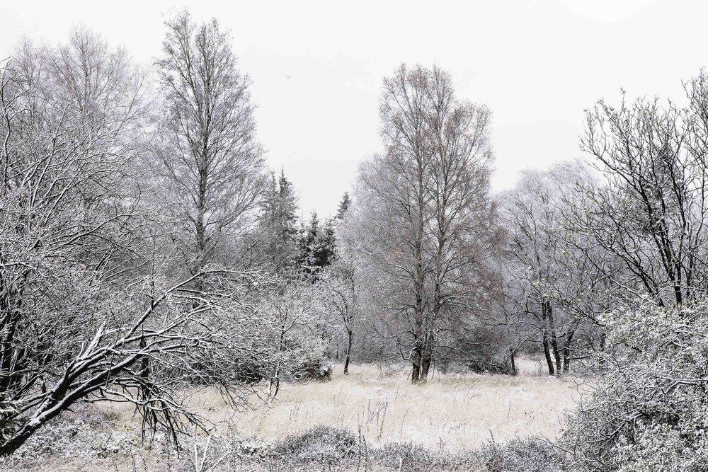 viewfinder-sneeuwlandschap-fotograferen-sneeuw-zorgt-voor-rust