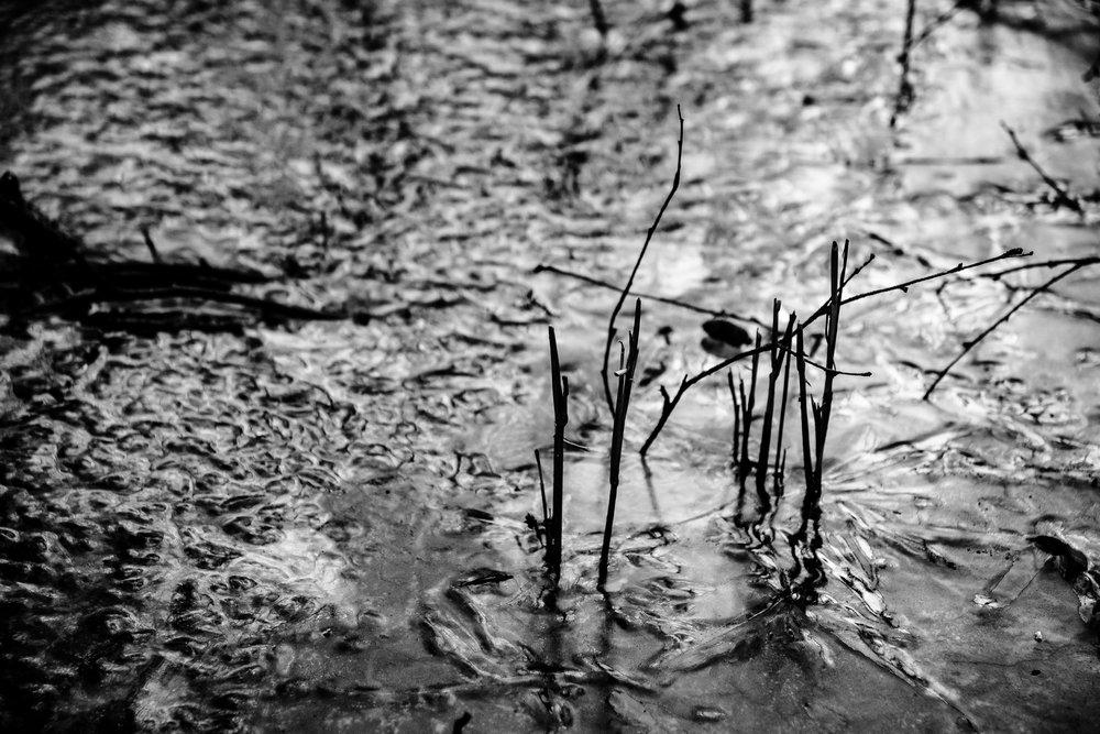 viewfinder-winter-fotografie-schorre-boom-fantasie-2.jpg
