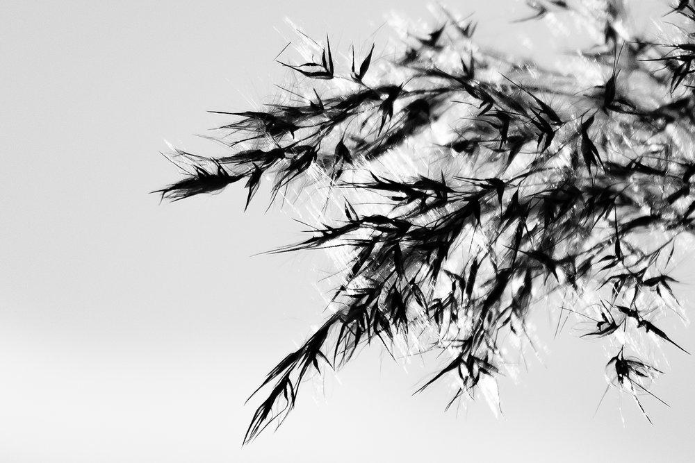 viewfinder-winter-fotografie-schorre-boom-fantasie-3.jpg
