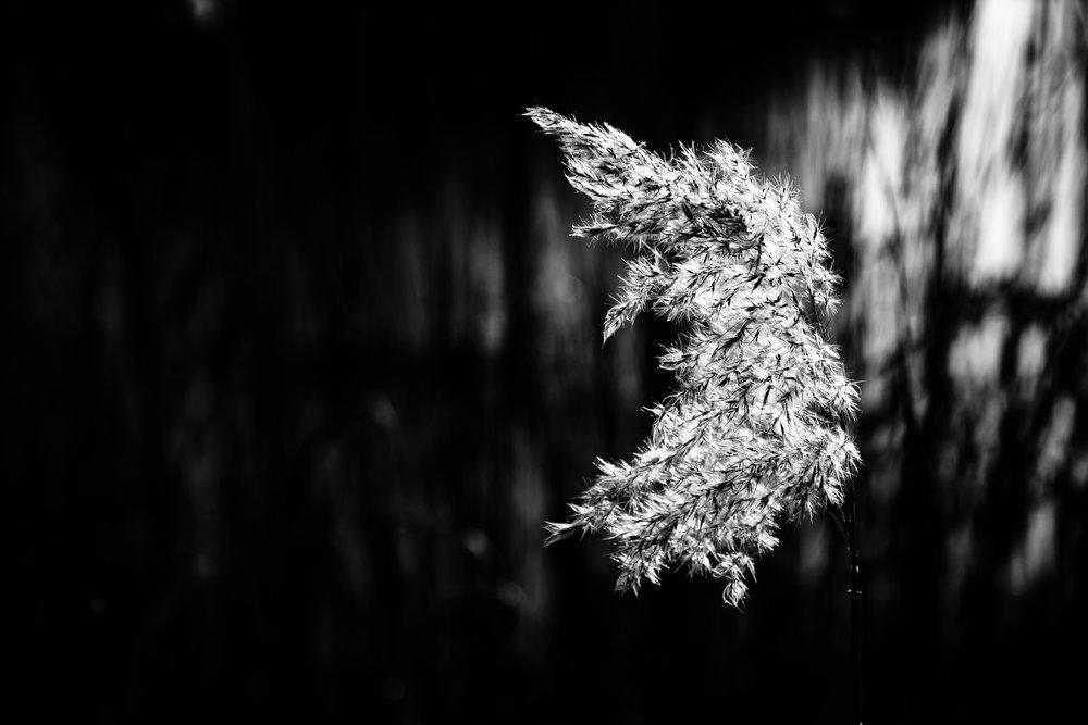 viewfinder-winter-fotografie-schorre-boom-fantasie-4.jpg