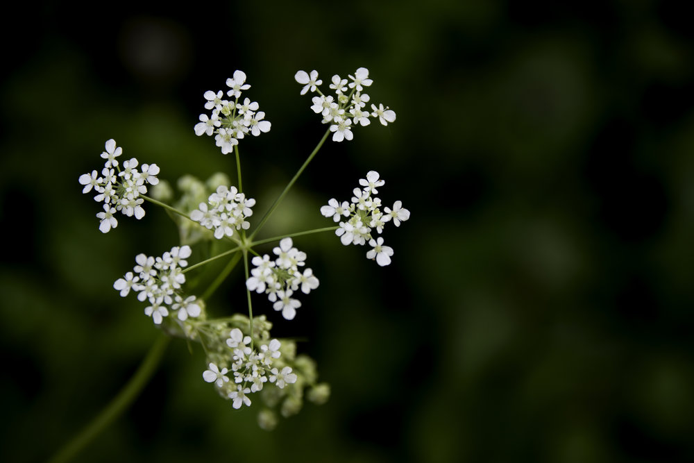 viewfinder-lentebloesem-fotograferen-close-up-laag-bij-grond