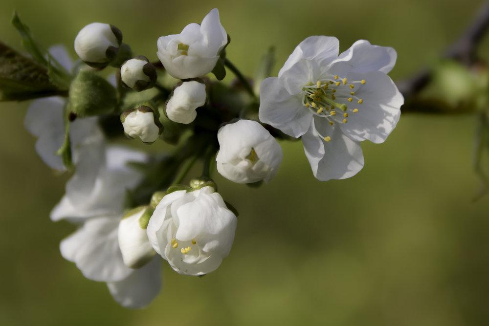 viewfinder-creativeboody-lentebloesem-fotograferen-rondom-je-huis-scherptediepte