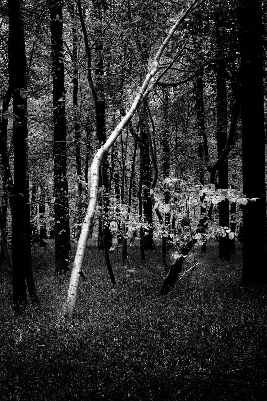 viewfinder-natuurfotografie-zwartwit-hallerbos-fotograferen-april-2017.jpg