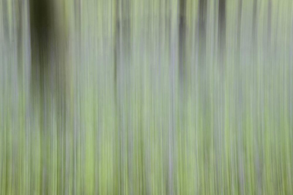 viewfinder-creatief-bos-fotograferen-pastel-2