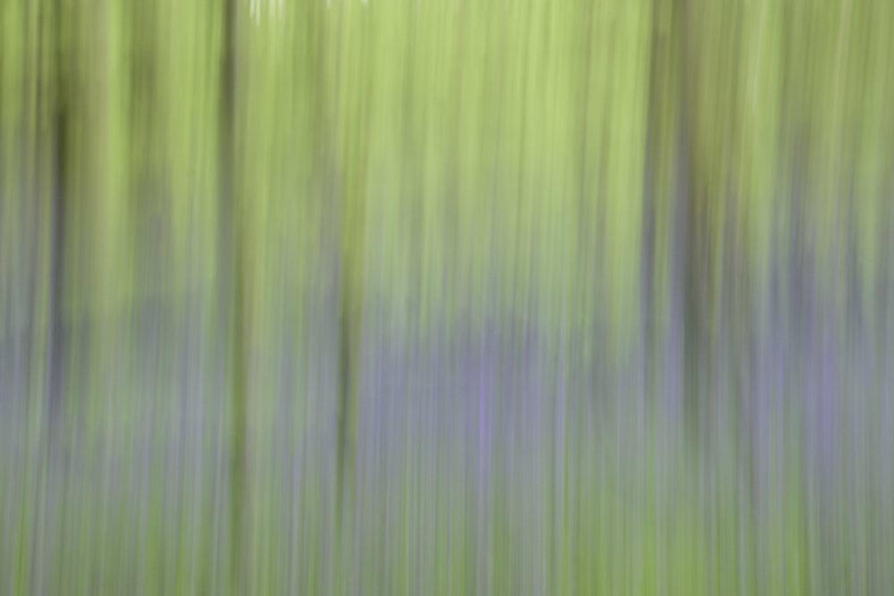 viewfinder-creatief-bos-fotograferen-pastel-3
