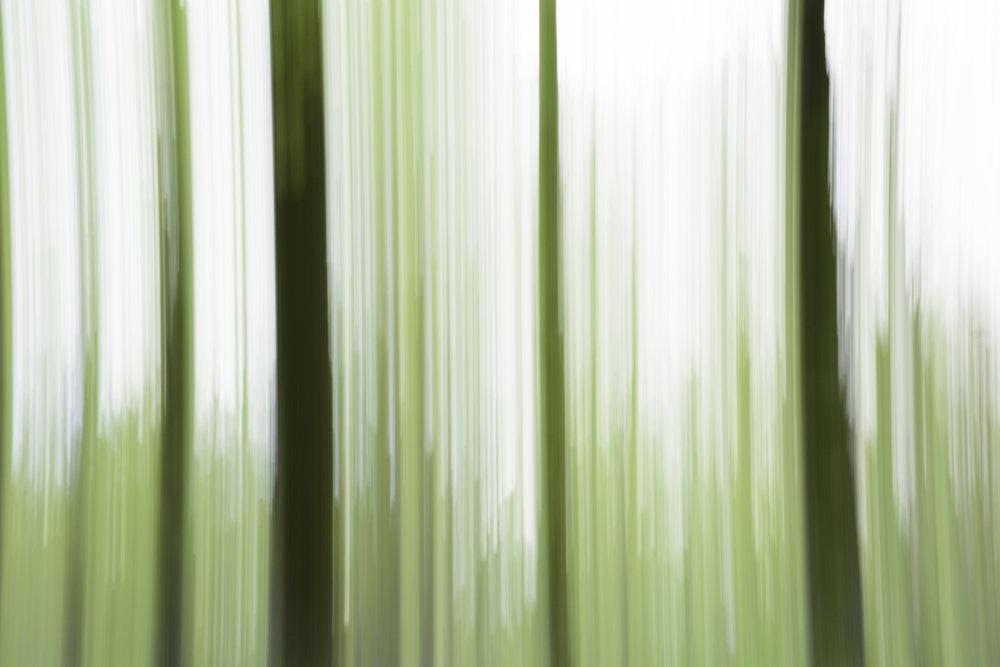 viewfinder-creatief-bos-fotograferen-pastel-4