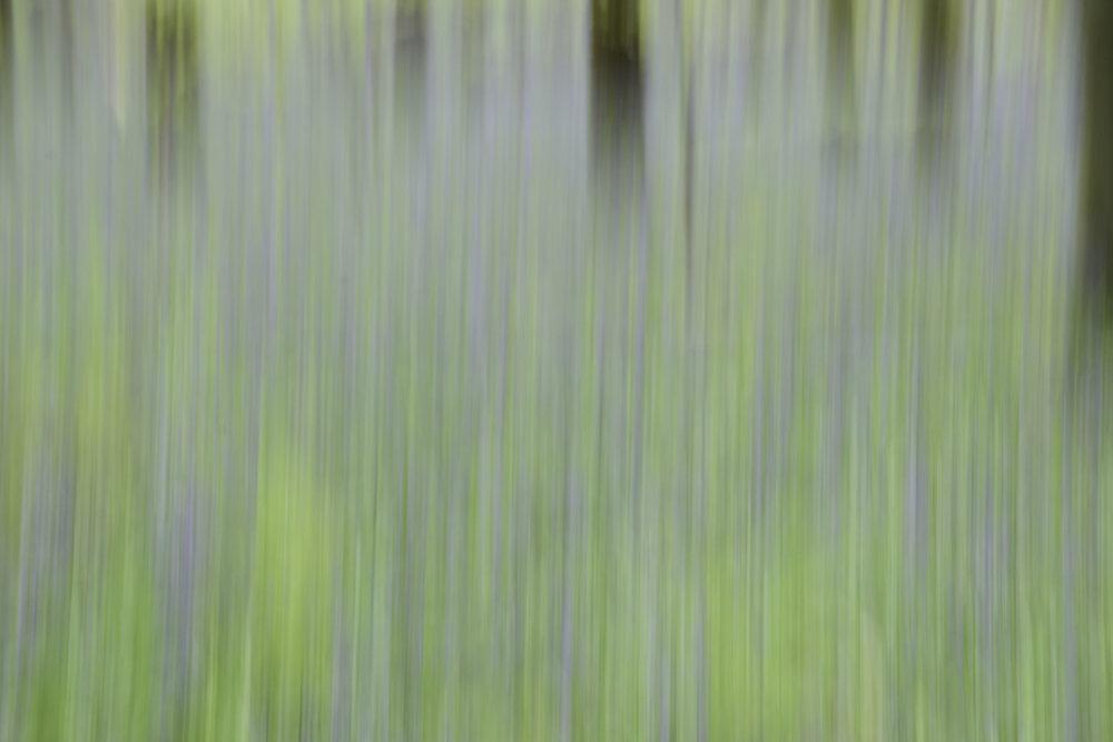 viewfinder-creatief-bos-fotograferen-pastel-6