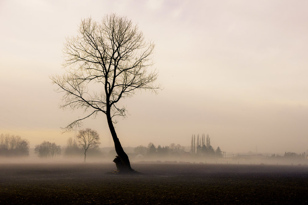 viewfinder-boom-in-de-mist-fotograferen-1