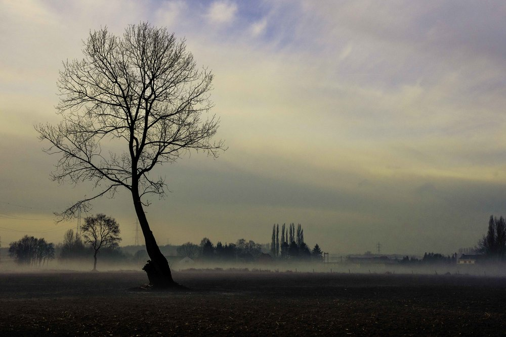 viewfinder-boom-in-de-mist-fotograferen-2