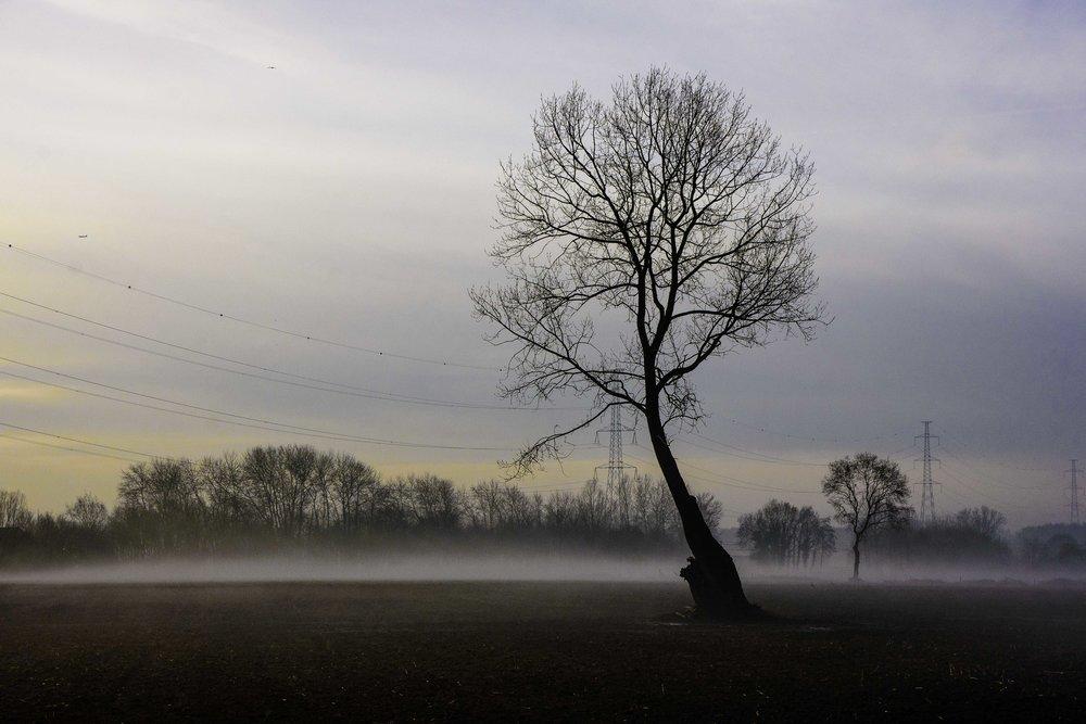viewfinder-boom-in-de-mist-fotograferen-3
