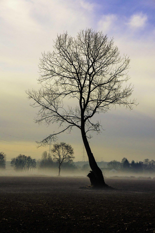 viewfinder-boom-in-de-mist-fotograferen-4