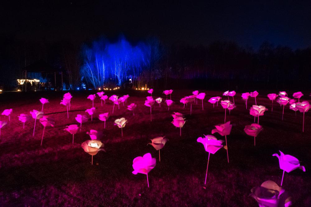 viewfinder-licht-fotograferen-nacht-avond-putteke-winter-boom-schorre-2