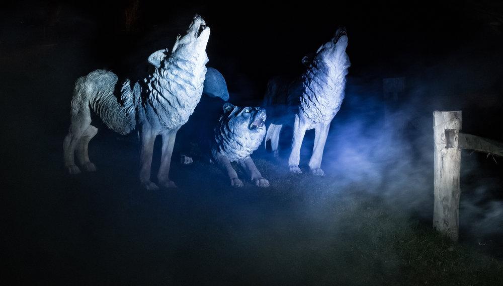 viewfinder-licht-fotograferen-nacht-avond-putteke-winter-boom-4