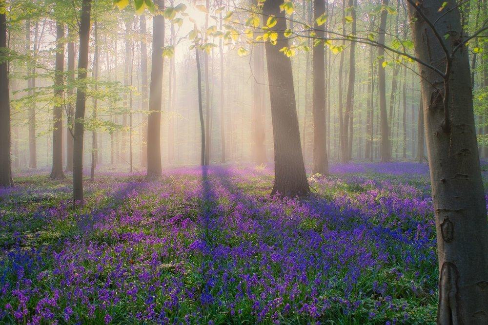 Mist zorgt voor een vleugje magie bij zonsopgang