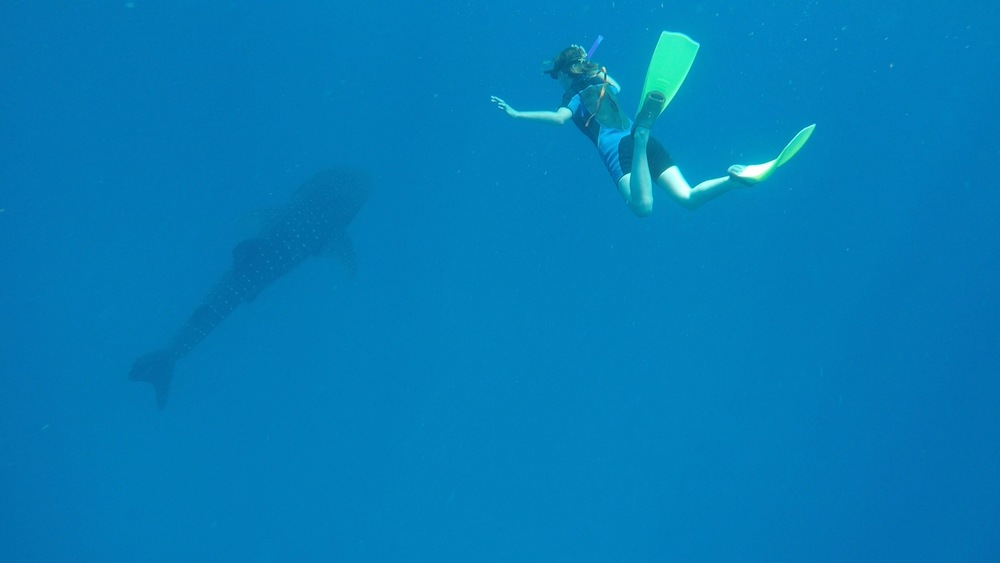 the national parks girl_isla mujeres_swimming with whale sharks_adventure travel_mexico_gopro.JPG