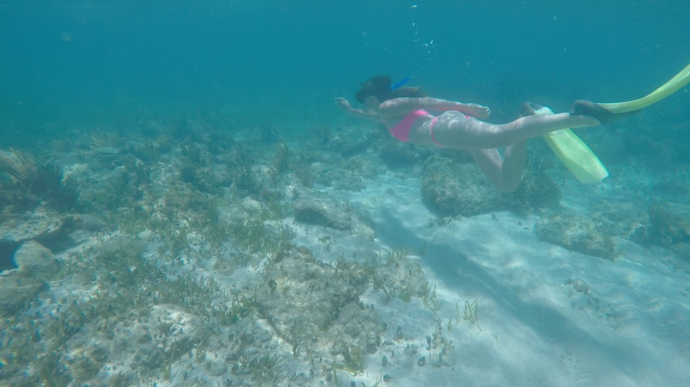 the national parks girl_swimming with whale sharks_isla mujeres_mexico_gopro_underwater photography.JPG