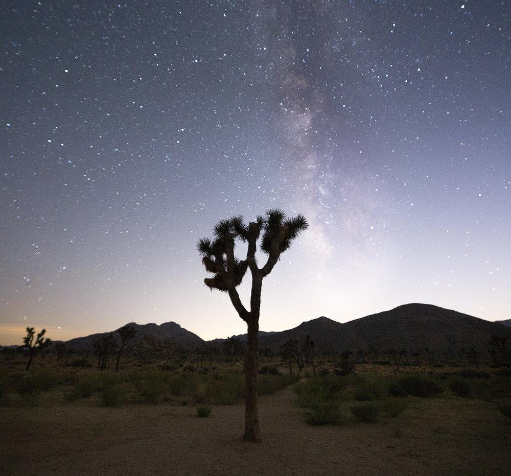 Joshua Tree Image 5.jpg
