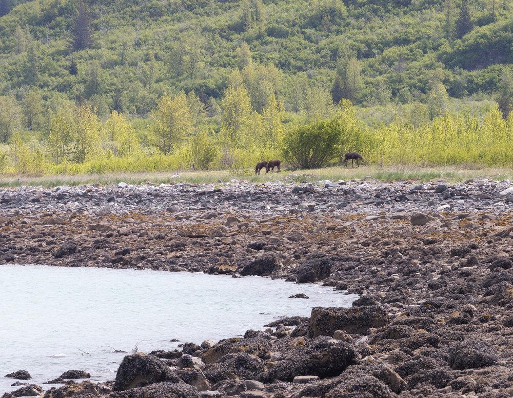 Glacier Bay National Park West Arm Kayaking Camping Trip-80.jpg