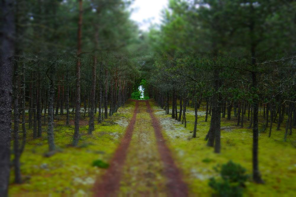 Fin skov
