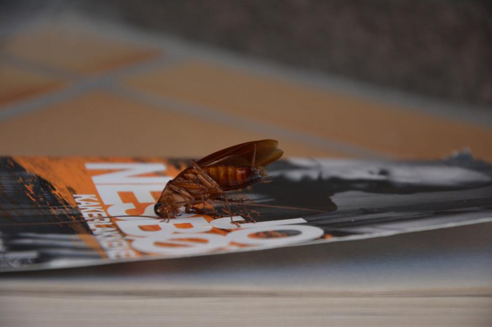 Boka blir enda bedre med autentiske kakerlakker