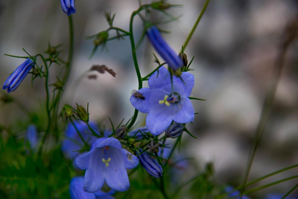 En hilsen til Blomster-Finn