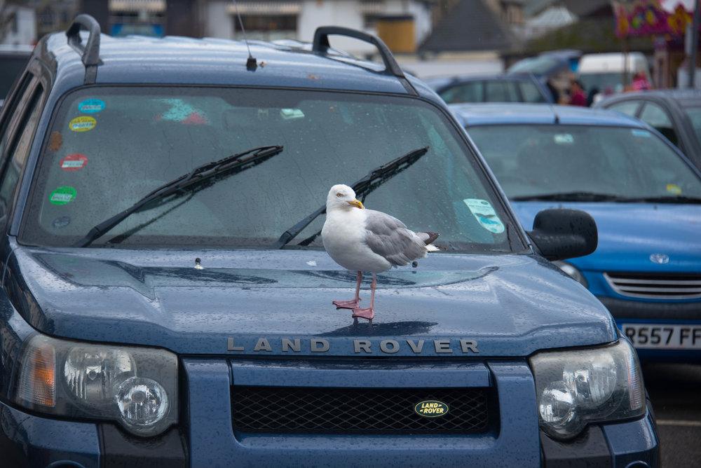 Greit å sitte på en engelsk drittbil-been there, done that! Aldri mer Land Rover!