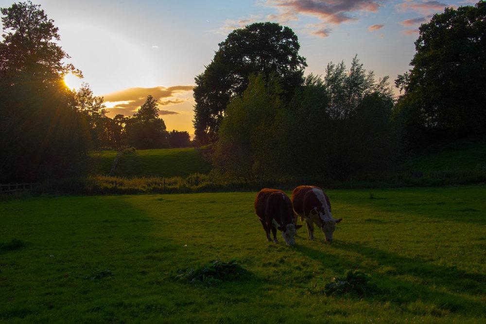 Synkrontygging i solnedgang