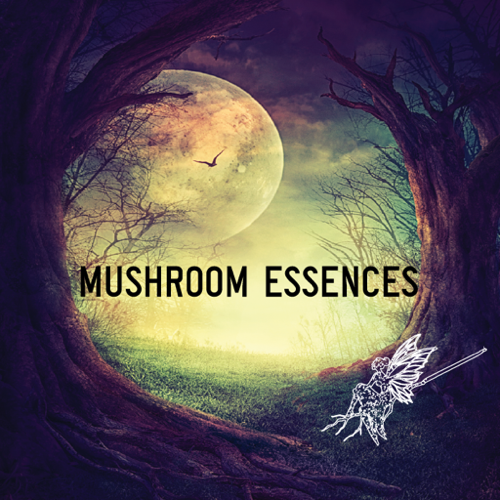 mushroomForest.jpg