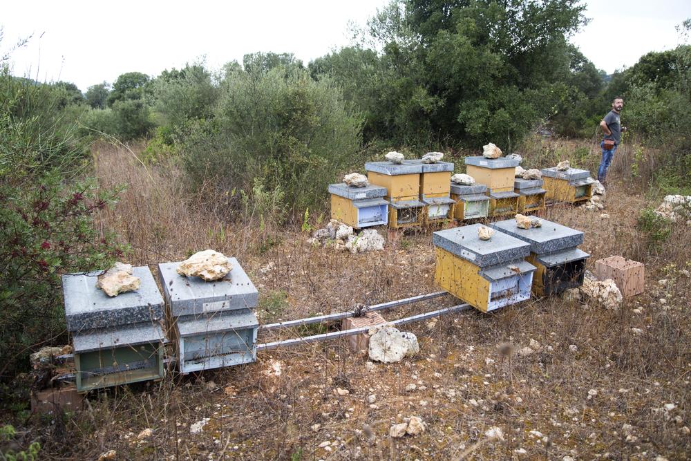 Filigheddu (Sassari), 2014. Nella Nurra di Sassari, a 27 km da Porto Torres, Giuseppe Marongiu del comitato Nurra Dentro produce miele. Le sue api provengono dall'entroterra industriale infestato dai pesticidi. La loro produzione di miele era molto scarsa e si è sostanzialmente rinvigorita qui a Filigheddu
