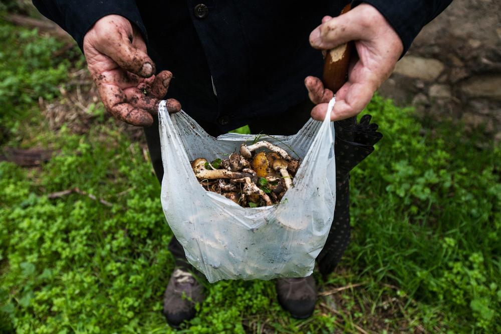 Un uomo raccoglie i funghi in un prato adiacente all'azienda Caffaro. Molti cittadini bresciani non sono a conoscenza del problema oppure lo sottovalutano.Brescia / Italia. Ottobre 2013