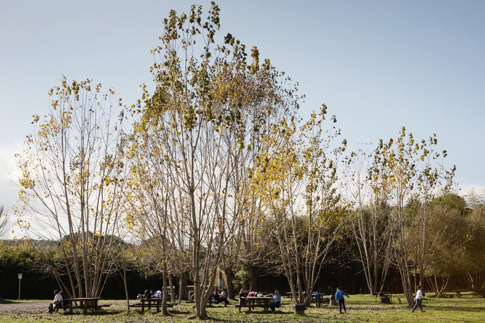 Il Parco naturale della Selva di circa 470 ettari è rifugio per varie specie di volatili, ma a causa della vicinanza alla discarica di Colleferro un'invasione di gabbiani attirati dalla presenza dei rifiuti sta alterando questo fragile ecosistema.Paliano, Parco naturale della Selva, dicembre 2013