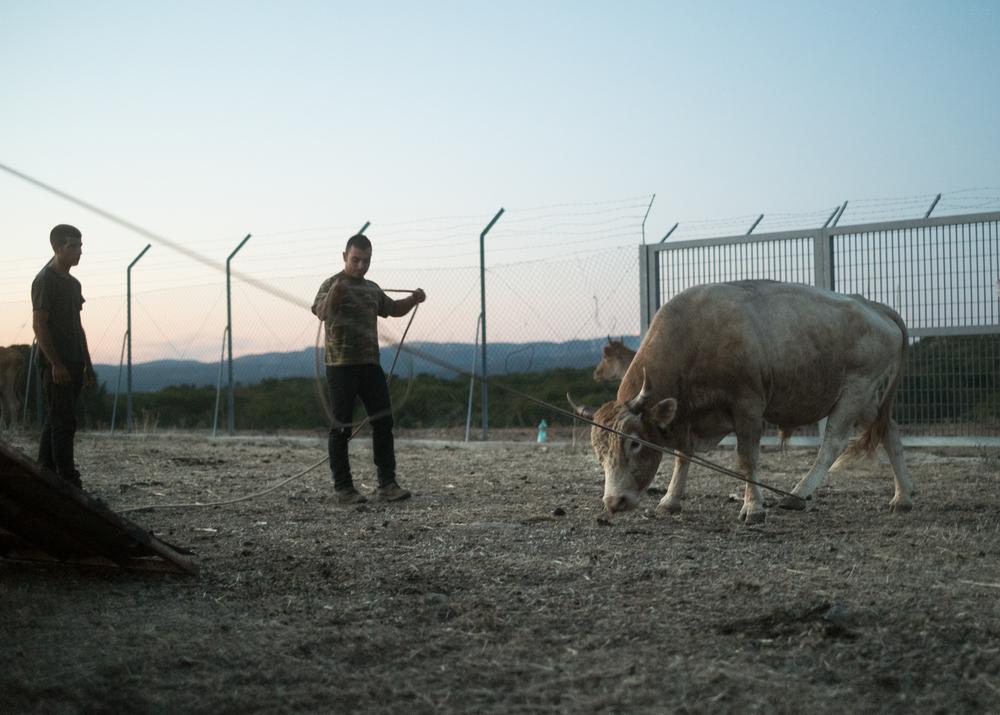Pastori all' interno di un recinto militare, area C, Monte Cardiga,comune di Villaputzu, poligono a terra.