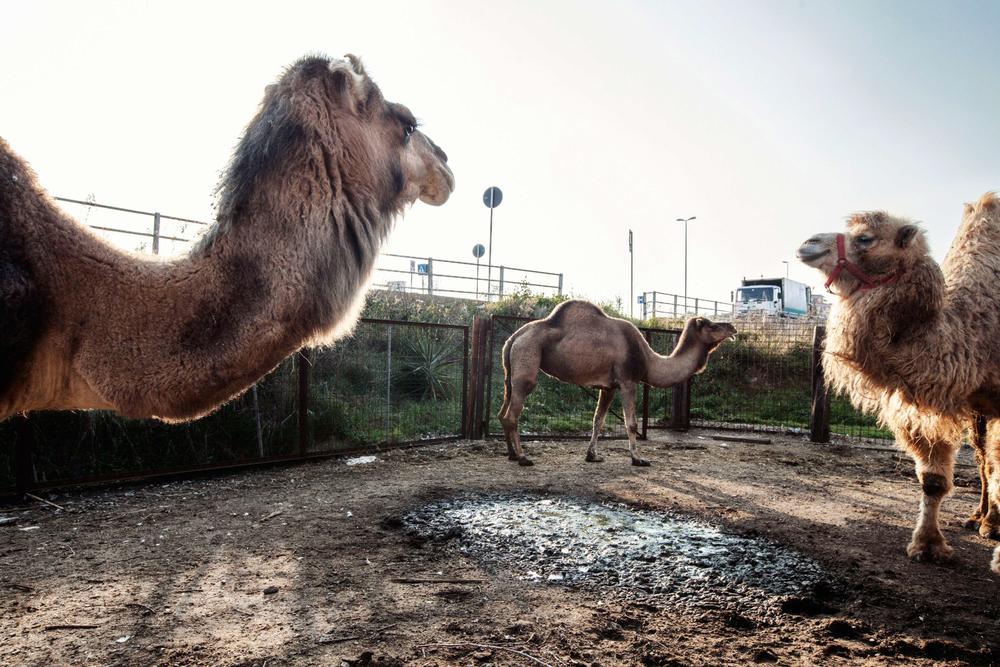 Zoo adiacente alla strada che porta alla discarica di Malagrotta