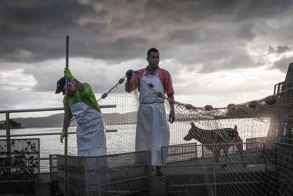 Peschiera di Nassa di Santa Liberata, Orbetello (Grosseto), 2015.La laguna di Ponente, ampia circa 1.500 ettari, è collegata al mare dalla foce di Santa Liberata. La Peschiera è nata secoli fa ed è molto distante dalla fabbrica della S.I.To.Co.