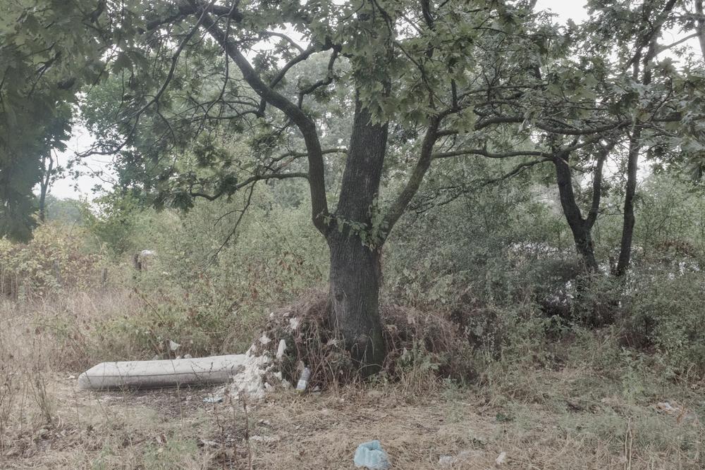 Bosco a poche centinaia di metri dalla discarica, Nettuno (RM), 2015