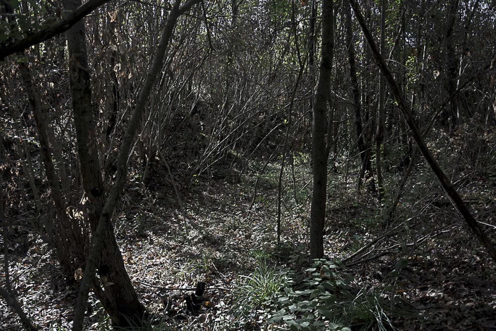 Pianura, Napoli, 2017. Sentiero nella Selva, sconosciuto polmone verde di Napoli, utilizzato per il trasporto di materiali legnosi ma erroneamente etichettato come sentiero per trasporto di rifiuti tossici e nocivi.